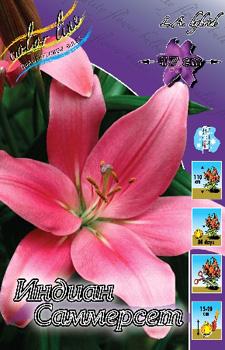 Оптовая торговля голландскими луковицами цветов (лилии ...