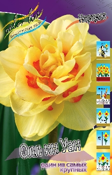 Narcissus All In One