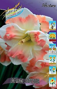 """Осень 2012 """"Color Line""""- Обсуждение возможного заказа. Заказ бывает срочным! Narcissus%20Cum%20Laude"""