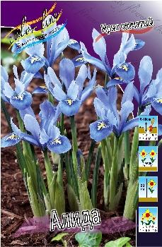 """Осень 2012 """"Color Line""""- Обсуждение возможного заказа. Заказ бывает срочным! Iris%20reticulata%20Alida"""