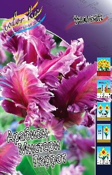 """Осень 2012 """"Color Line""""- Обсуждение возможного заказа. Заказ бывает срочным! Tulipa%20Arabian%20Mystery%20Parrot"""